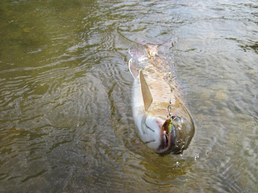 рыбалка в мостовском районе